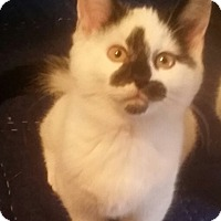 Adopt A Pet :: Petunia - Cleveland, OH