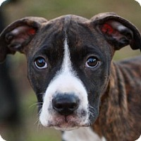 Adopt A Pet :: Moze - ADOPTION IN PROGRESS - Bedminster, NJ