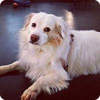 Adopt A Pet :: Kyle - courtesy posting - Canoga Park, CA