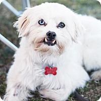 Adopt A Pet :: Kala - San Diego, CA