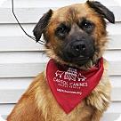 Adopt A Pet :: Brodie