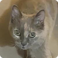 Adopt A Pet :: Valerie - Toronto, ON
