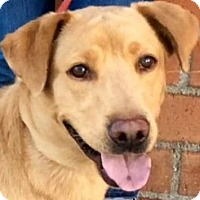 Adopt A Pet :: JENNY (video) - Los Angeles, CA