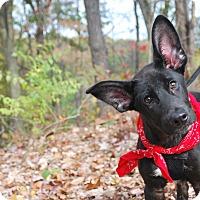 Adopt A Pet :: Obie - New Castle, PA
