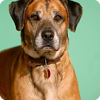 Adopt A Pet :: Rocky - Pottsville, PA