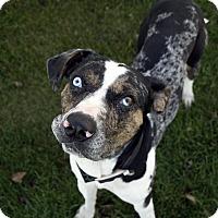 Adopt A Pet :: Paco - Fremont, NE