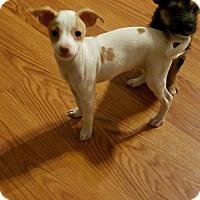 Adopt A Pet :: Romeo - Lodi, CA