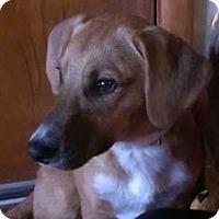 Adopt A Pet :: Jackson - Lima, PA