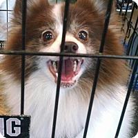 Adopt A Pet :: Rex - Pembroke, GA