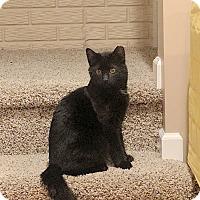 Adopt A Pet :: Randy - Fowlerville, MI