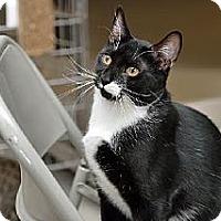 Adopt A Pet :: Tyler - Philadelphia, PA