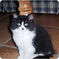 Adopt A Pet :: Kiara - Irvine, CA