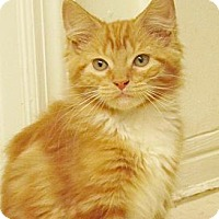 Adopt A Pet :: Rusty - Seminole, FL