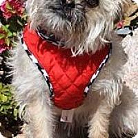 Adopt A Pet :: Ewok - Gilbert, AZ