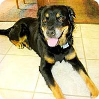 Adopt A Pet :: Jessie - Scottsdale, AZ