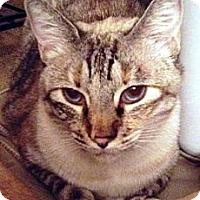 Adopt A Pet :: Chaka - Gilbert, AZ