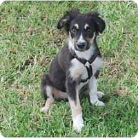Adopt A Pet :: Kylie - Minneola, FL