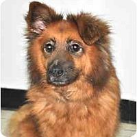 Adopt A Pet :: Cookie - Port Washington, NY