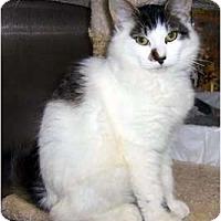 Adopt A Pet :: Gucci - New Port Richey, FL