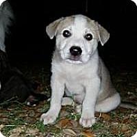 Adopt A Pet :: Rosebud - Westfield, MA