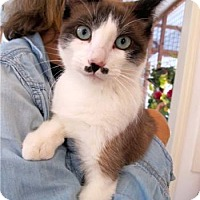 Adopt A Pet :: Chaplin - Davis, CA