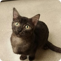 Adopt A Pet :: Westley - Edmond, OK