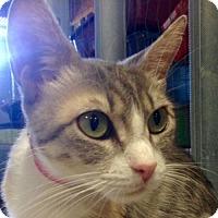Adopt A Pet :: SuzyQ - Redwood City, CA