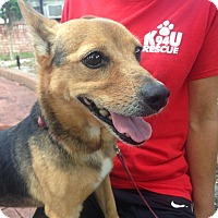 Adopt A Pet :: Destiny - Coral Springs, FL