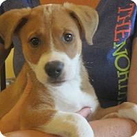 Adopt A Pet :: Emily - Westport, CT