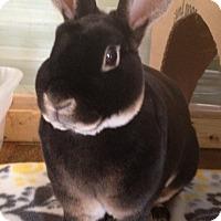 Adopt A Pet :: Wyatt - Watauga, TX