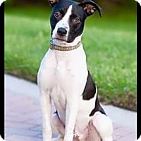 Adopt A Pet :: Wally - Hollywood, FL