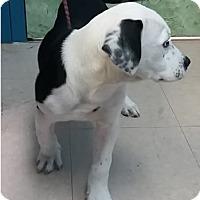 Adopt A Pet :: Brady - Avon, NY