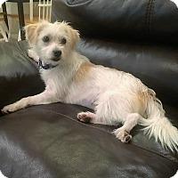 Adopt A Pet :: Sophie - Ft. Lauderdale, FL