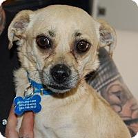 Adopt A Pet :: Jonah - Brooklyn, NY