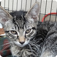 Adopt A Pet :: Emery 1 - Elyria, OH