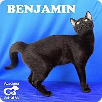 Adopt A Pet :: Benjamin - Carencro, LA