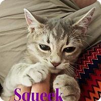 Adopt A Pet :: Squeak - Capshaw, AL