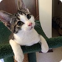Adopt A Pet :: Harlow - Salem, OH