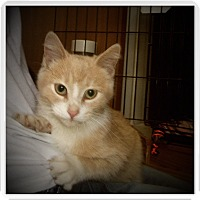 Adopt A Pet :: JOURNEY - Medford, WI