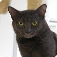 Adopt A Pet :: Lennox - Lafayette, NJ