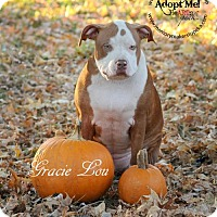 Adopt A Pet :: Gracie Lou - Topeka, KS