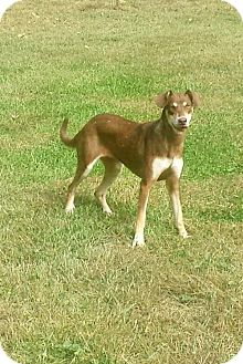 Hound (Unknown Type) Mix Dog for adoption in Trenton, New Jersey - Violet