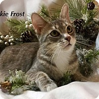 Adopt A Pet :: Jackie Frost - Newport, KY
