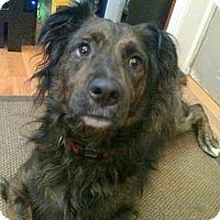 Adopt A Pet :: Bernadette - Concord, NC