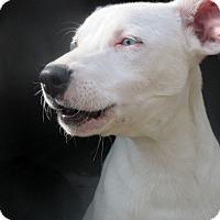 Adopt A Pet :: Blue Spring - Godley, TX