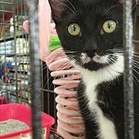 Adopt A Pet :: Fox - Long Beach, CA