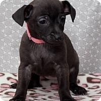 Adopt A Pet :: Nancy Bradford - Hillside, IL