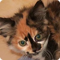 Adopt A Pet :: Magnolia - Bedford, VA