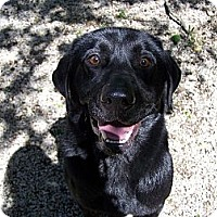 Adopt A Pet :: Duke ADOPTED!! - Antioch, IL