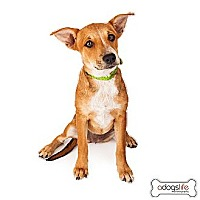 Adopt A Pet :: Willow - Scottsdale, AZ
